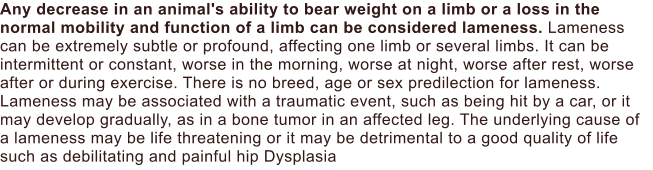 Any decrease in an animal's ability to bear weight on a limb or a loss in the normal mobility and function of a limb can be considered lameness. Lameness can be extremely subtle or profound, affecting one limb or several limbs. It can be intermittent or constant, worse in the morning, worse at night, worse after rest, worse after or during exercise. There is no breed, age or sex predilection for lameness. Lameness may be associated with a traumatic event, such as being hit by a car, or it may develop gradually, as in a bone tumor in an affected leg. The underlying cause of a lameness may be life threatening or it may be detrimental to a good quality of life such as debilitating and painful hip Dysplasia